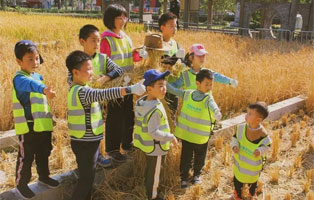 「上海户外 」2020秋季爆款   市中心收割黄金水稻?你一定不是最后一个知道的!(1天)