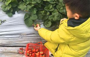 「上海亲子」2020五一哈童春季骑行,横沙岛环岛骑行,采摘草莓!
