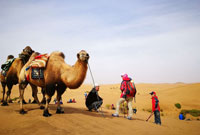 参加沙漠草原夏令营的目的!