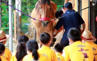 「江苏户外」2021苏州身心灵健康马术夏令营(5天)| 贵族运动,潇洒骑士